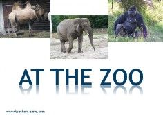 zoo animals flashcards