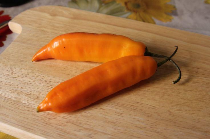 Aji Amarillo - PeperonciniPiccanti.com #hotpeppers #aji #pimenta #peperoncino #peperoncini
