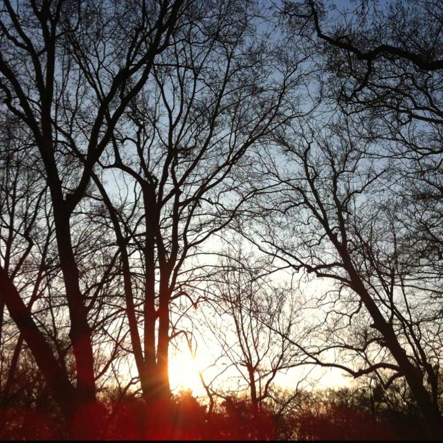 Sundown in the trees