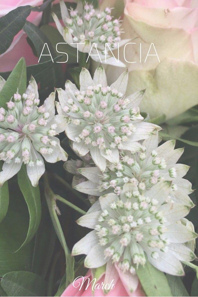 Flowers in March: Astancia Wedding Bouquet in Paris