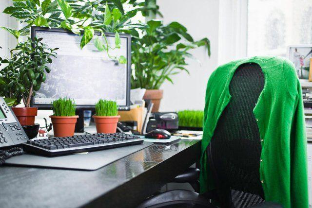 Egy nemrégi tanulmány szerint a munkahelyen lévő növények a #produktivitást 15%-kal növelik