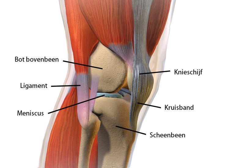 Afbeeldingsresultaat voor knie spieren