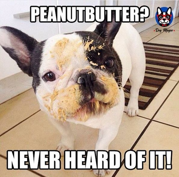 14 French Bulldog Memes That Will Make Your Day Page 2 Of 4 Petpress French Bulldog Funny French Bulldog French Bulldog Quotes