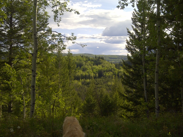 Blue Spruce Trail.... Obliterate some calories by jogging or walking the entire Blue Spruce Trail... Hard to match this scenery.