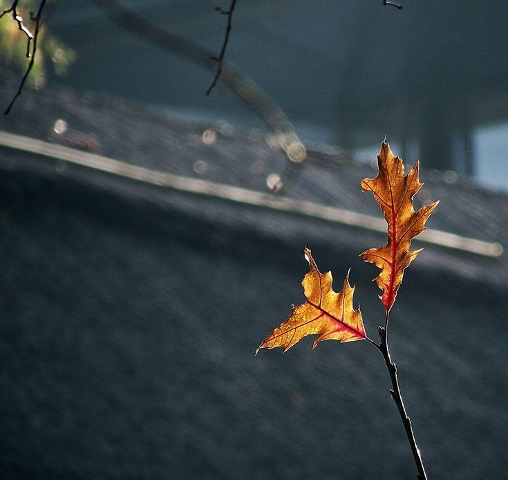 Autumn by nancydev