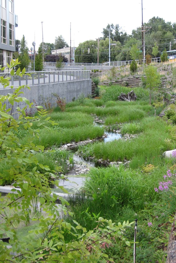 A roadside rain garden that stores stormwater and allows it to infiltrate into the soil.