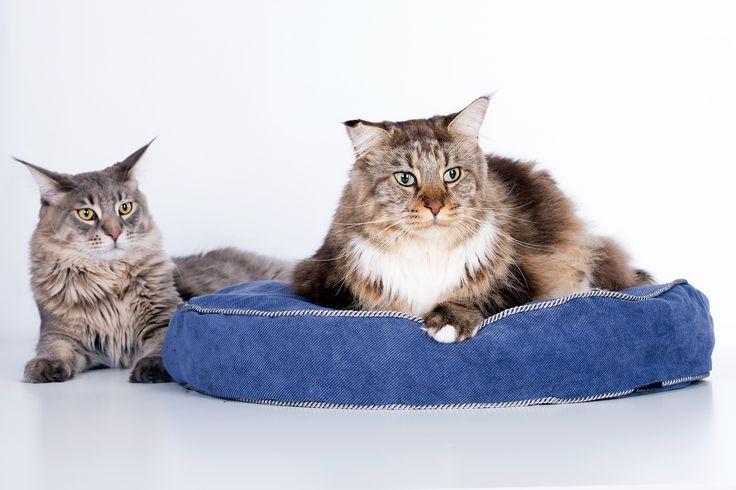 Cat Dens created by @cosyanddozy #catpillow #catbed #forcats #catloversworld #dlakota #giftfotcat #catdesign foto from @Fotografiazwierząt-KamilCzyżewski