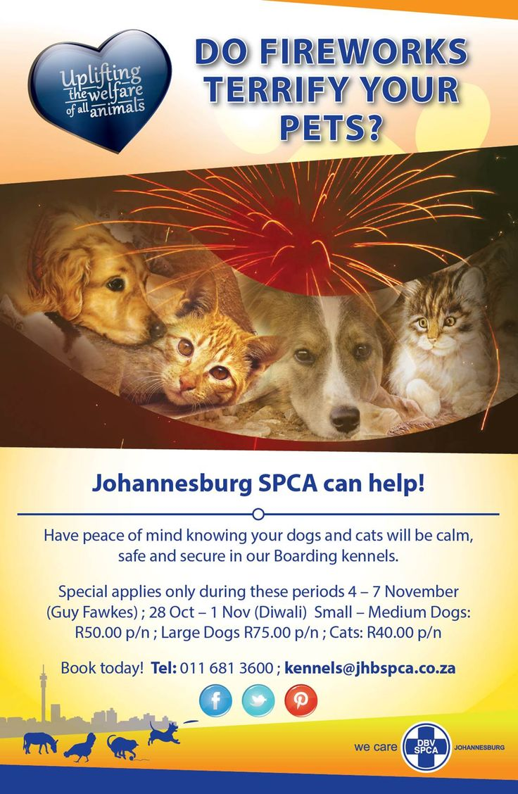Do Fireworks TERRIFY your pets? Johannesburg SPCA can help!  Have peace of mind knowing your dogs and cats will be calm, safe and secure in our Boarding kennels.  50% SPECIAL - Special applies only during these periods 4 – 7 November (Guy Fawkes) ; 28 Oct – 1 Nov (Diwali) Small – Medium Dogs: R50.00 p/n ; Large Dogs R75.00 p/n ; Cats: R40.00 p/n  Book today! Tel: 011 681 3600 ; kennels@jhbspca.co.za