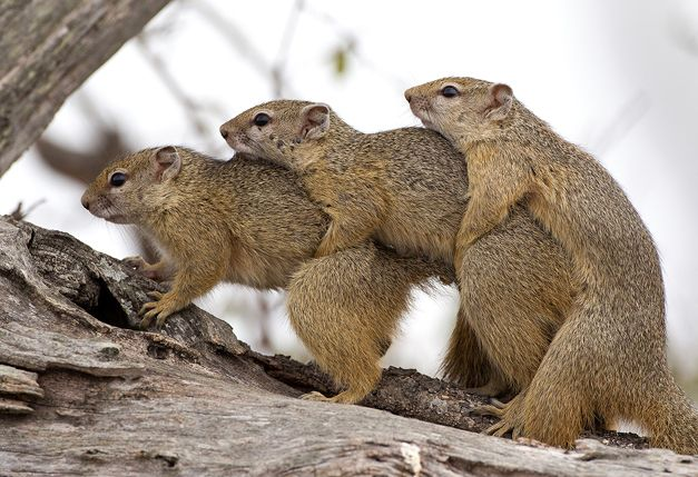 """NUMBER 6: """"Squirrels"""" by Max Waugh, captured in August 2012 with Nick du Plessis as ranger."""