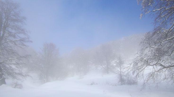Domenica 9 2 2014 Tardo pomeriggio ....finalmente il sole. Neve in Abbondanza. #MalgaValbella