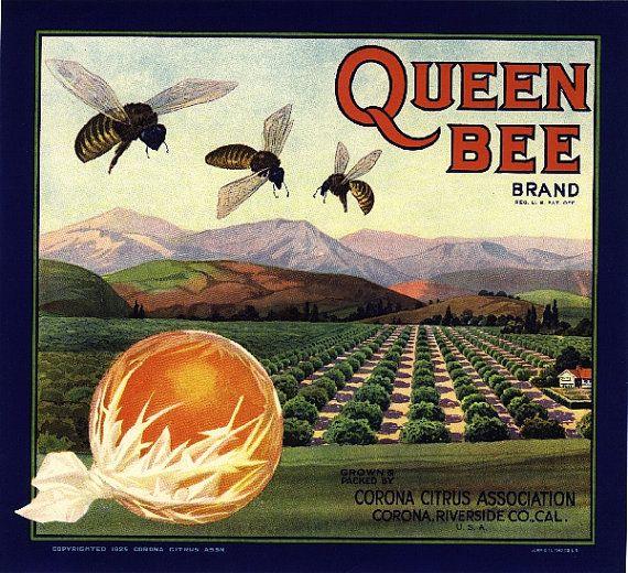 Corona Queen Bee Orange Citrus Fruit Crate Box by ASLICEINTIME, $9.99