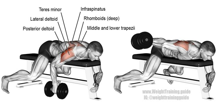 Lying Dumbbell One Arm Rear Lateral Raise An Isolation