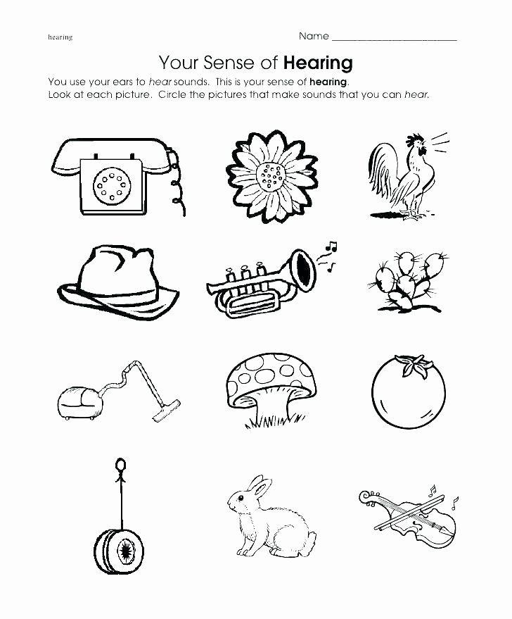 5 Senses Worksheets For Kindergarten Kindergarten Ience Worksheets Five Senses Inside Prin In 2020 Kindergarten Worksheets Art Worksheets Printables 5 Senses Worksheet