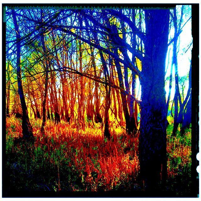 Fall is here #fall #autumn #landscape #sunshine #sun #sunbeam #tree #sergepichii