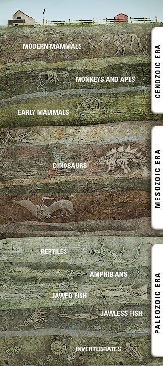 THE THREE LAYER CAKE There are thousands upon thousands of layers in the earth's crust. However, scientists have grouped the layers into major groups. The most recent three layers are the Paleozoic,...
