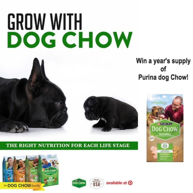 Calling all dog owners! Hurry and enter for a chance to win a year's worth of Purina Dog Chow! Five winners in total. Good luck! #ThrowBarkDogChow #ad