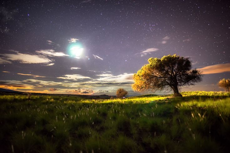 A Summer Night with the a Tree and the Moon. Big Island Hawaii [OC] [20481365] #reddit