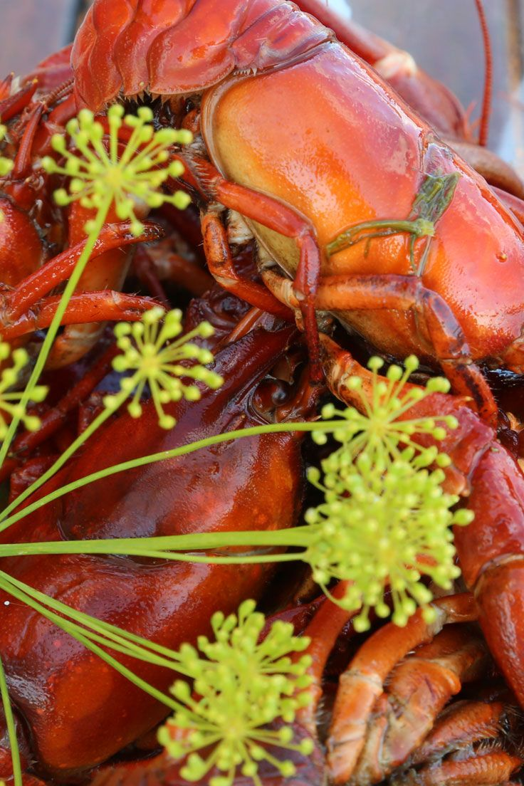 August Crayfish Parties Are One Of The Highlights Of The Swedish Calendar  And Appeal To People
