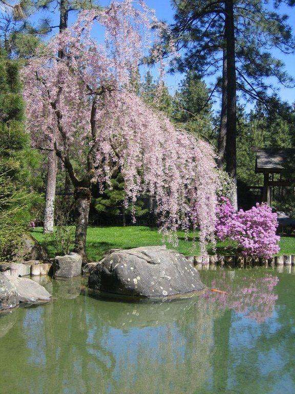 229 Best Japanese Gardens Images On Pinterest Japanese Gardens Zen Gardens And Asian Garden