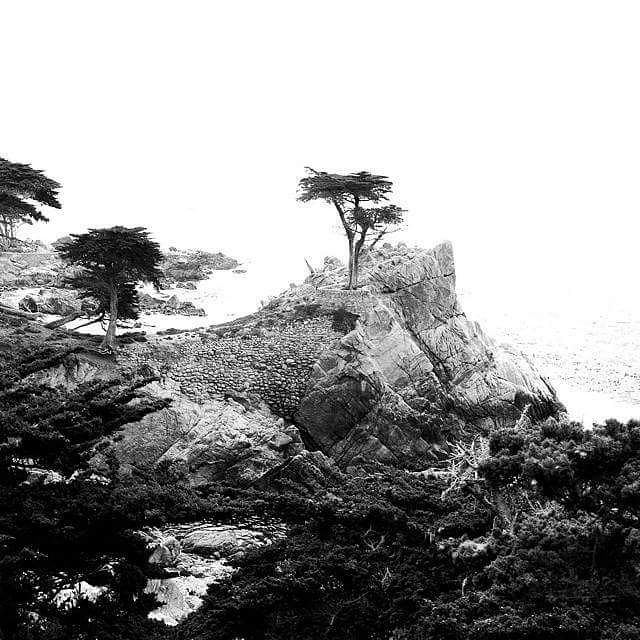 Lone tree on a cliff  17 Mile Drive, Pebble Beach, Monterey, CA . . . . . . . . #monterey #pebblebeach #fog #tree #pacificocean #trees #pacificcoast #pacific #carmel #californiacoast #foggy #pacificbeach #treestagram #mist #mothernature #treescape #weather #831 #californialove #misty #montereybay #naturephoto #naturelove #naturelover #naturegram #natureonly #bw #blackandwhitephotography #monochrome #noiretblanc #montereybaylocals - posted by Violet Arpel https://www.instagram.com/violetarpel…