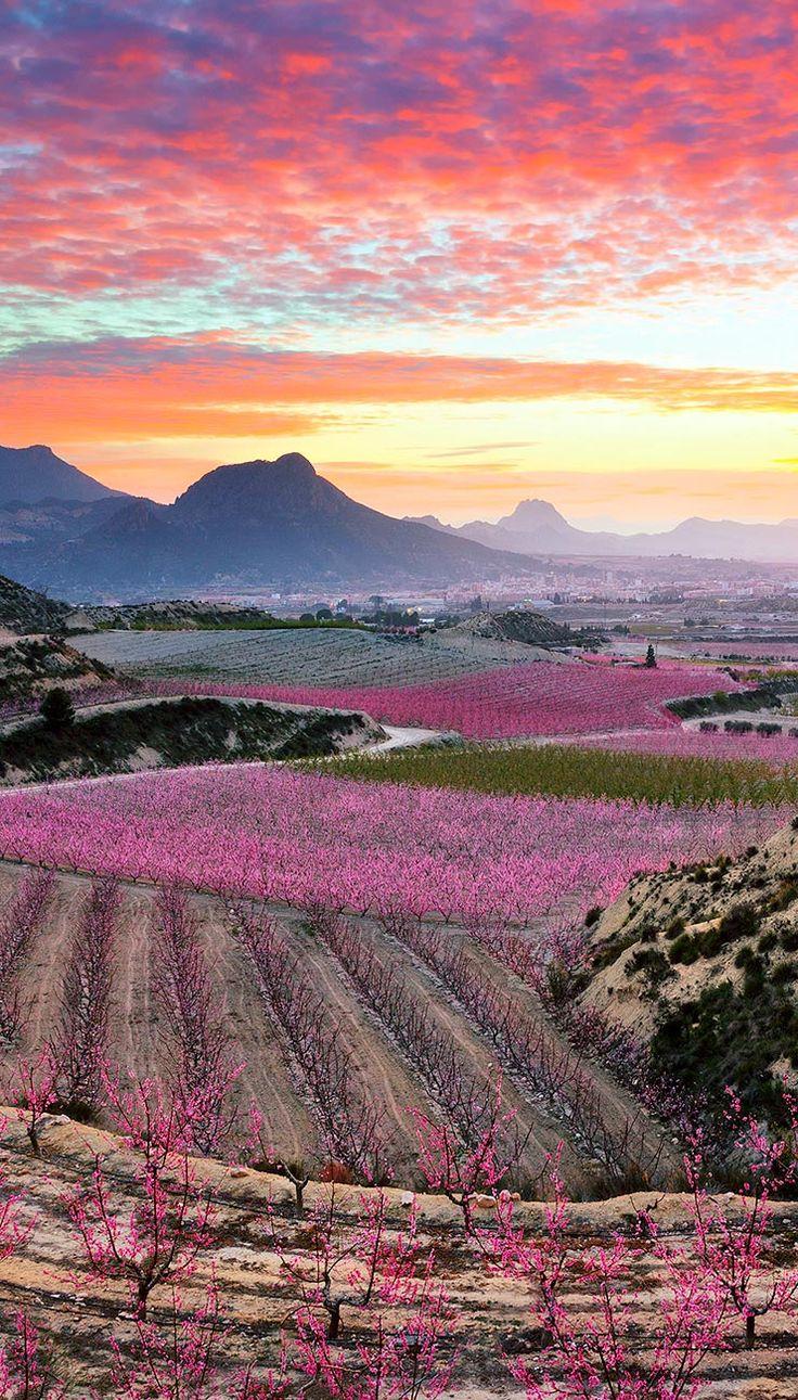 Este fin de semana a #Cieza, en #Murcia, a disfrutar de la espectacular floración de sus árboles frutales. Murcia de color de rosa :-) #viajes #travel #primavera #flores #españa #spain #paisajes #findesemana
