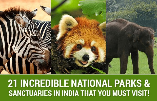 national-parks-and-wildlife sanctuaries-must-visit-in-india