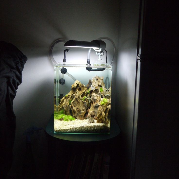 Le Baou - Nano Dennerle 20l - Okho Stones - Aquascaping