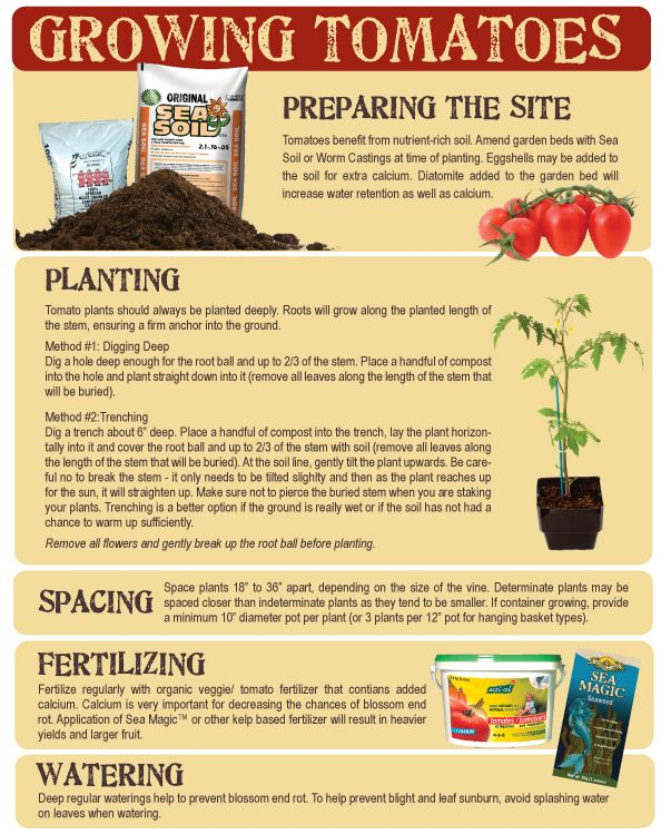 Tomato growing tips growing pinterest for Tomato gardening tips