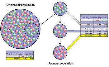 Genetic drift - Wikipedia