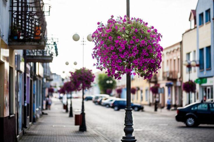 Ukwiecenie miasta: wiszące kaskady czy kwietniki Jiflor? | Inspirowani Naturą | hanging flower decor for public spaces
