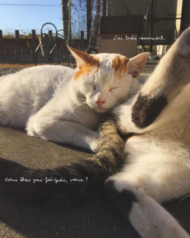 眠り猫。  #眠り猫 #猫 #にゃんすたぐらむ #猫好き #愛猫 #愛しすぎる #癒しをありがとう #にゃんにゃん #猫バカ #猫のいる暮らし #日々の暮らし #cat #japan #ねこ部 #🐈