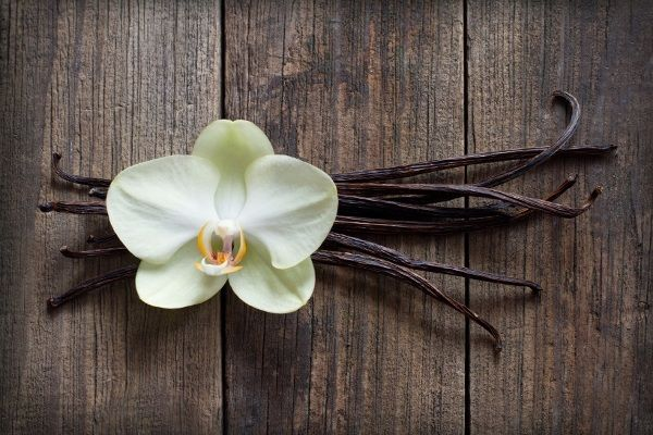 A tropical plant and member of the orchid family, the vanilla bean plant can be grown at home with the right conditions and care.
