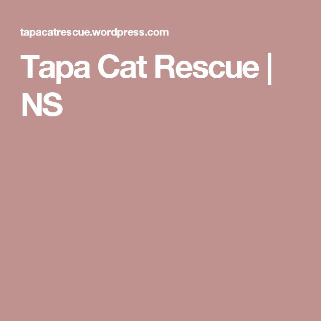 Tapa Cat Rescue | NS
