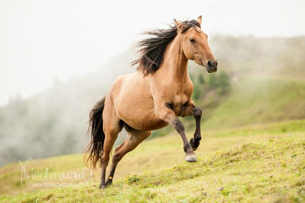 Mustang - Pferdefotografie, Hundefotografie, Fotografie Bettina Niedermayr Pferde - Mensch & Pferd - Hunde- Portrait - Stallschilder - Kalender, Pferdekalender, Haflingerkalender mit Kohlfuchs Liz. Steiermark