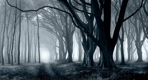 Beautiful and unusual trees