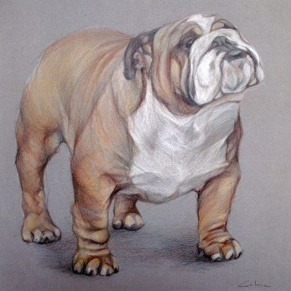 American Bulldog ART Pet Portrait Drawing by ...