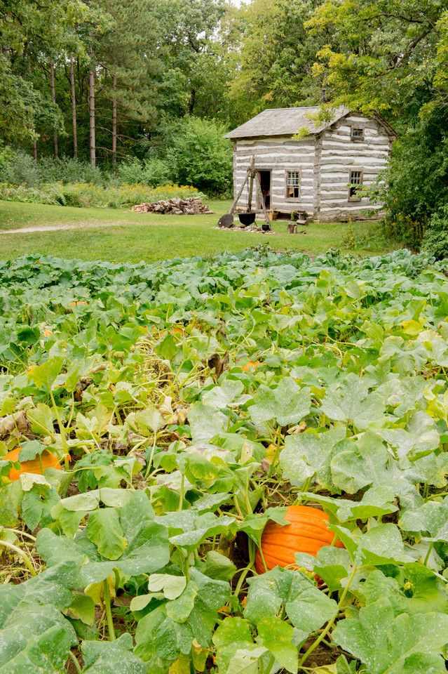 Pumpkin patch at Fossebrekke farm in the Norwegian area - Old World Wisconsin - Loydheathphotography