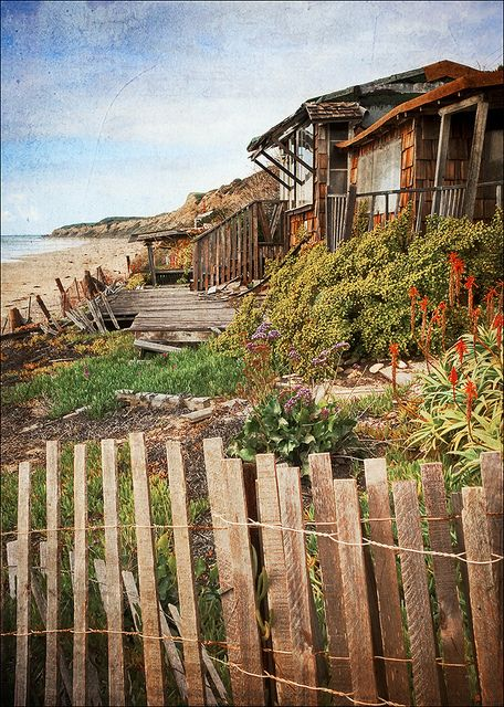 Southern California windswept cottage by the sea, the surfer's classic abandoned garden