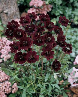 best 50 mein garden images on pinterest gardening. Black Bedroom Furniture Sets. Home Design Ideas