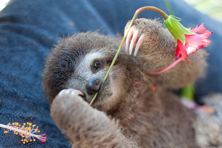 """…all things that affect every wildlife species, but especially sloths that do not have the ability to jump away from danger or run quickly across the road"""