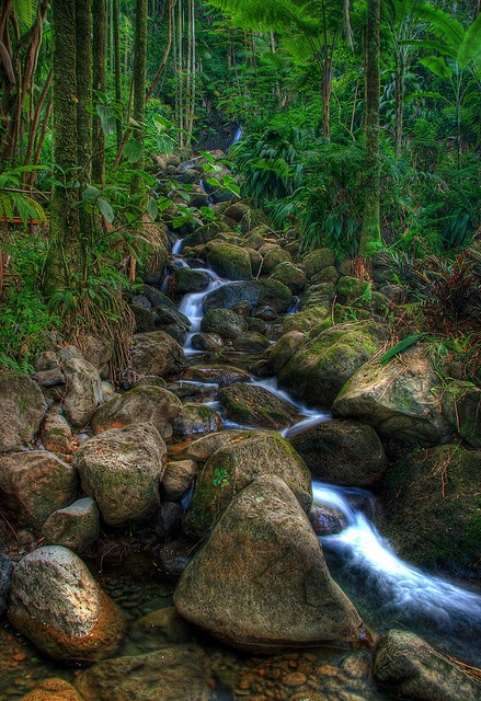 River to Paradise by Favid Lep,  Botanical Gardens, North of Hilo, Hawaii.