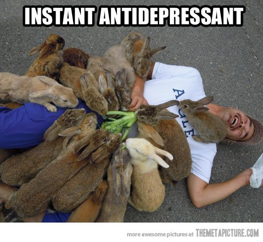 Bunnies cure everything…