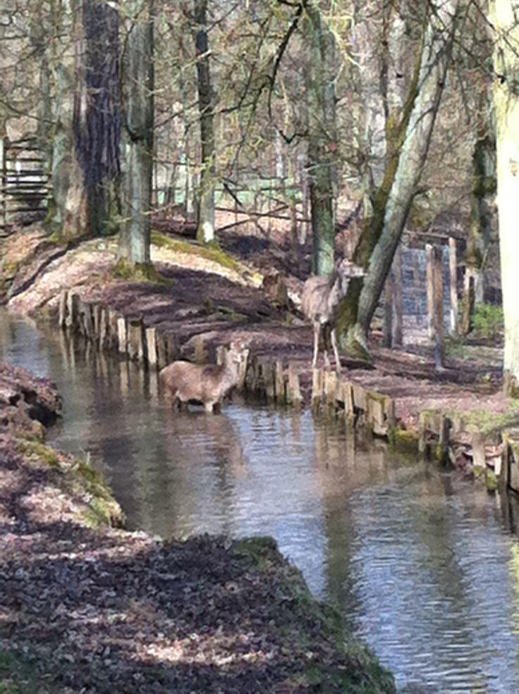 Schloss und Park warten auf Sie. WildPark Schloss Tambach http://dld.bz/fa4H2
