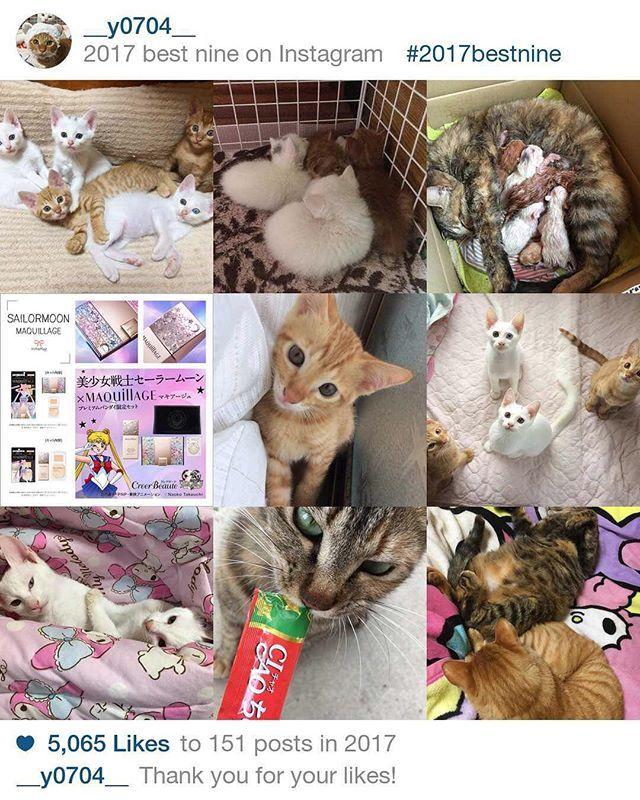 ⋆ #2017bestnine  猫だらけ。 妥当よね。 ⋆ 2017年もありがとうございました。 喪中なので個々のご挨拶はしませんが、 来年も猫だらけInstagramをよろしくお願いします。 ⋆ #cat #catstagram #instacat #neko #cute #ilovecat #cats #catsofinstagram #catlover #ilovemycat #pet #ふわもこ部 #猫 #愛猫 #🐈 #❤ #photo #猫部 #instadaily  #instagood #cute #kawaii #茶トラ #にゃんすたぐらむ #ニャンコ #にゃんこ #にゃんだふるらいふ #ねこすたぐらむ
