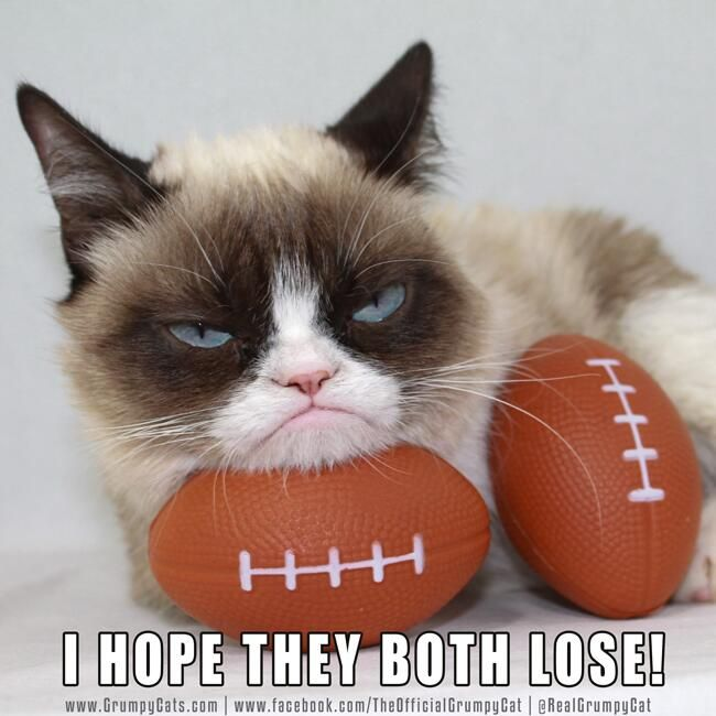 GrumpyCat on the SuperBowl