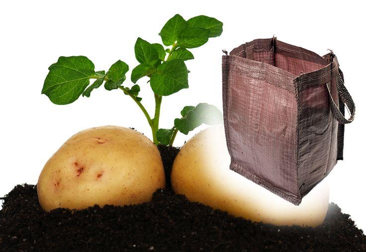 V pěstebním vaku vypěstujete brambory snadněji než na záhoně!