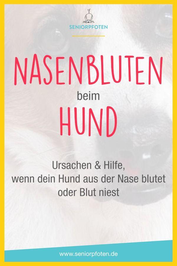 Nasenbluten Beim Hund Ursachen Und Hilfe Nasenbluten Hunde Nase