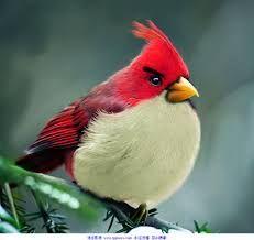 Imagini pentru 鳥