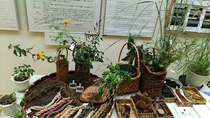 手つむぎ、染め、織り展 「染めの材料になる植物」