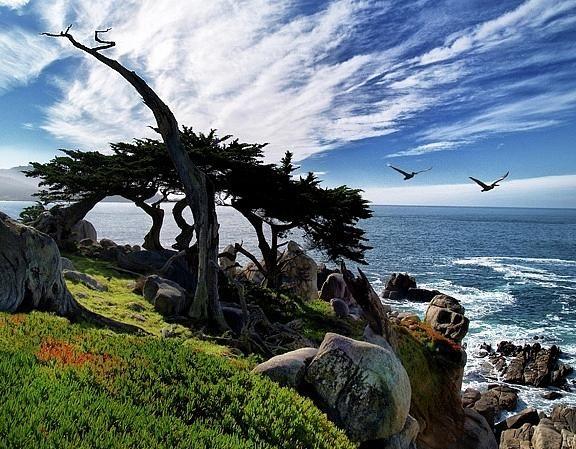 Ghost tree- 17 Mile Drive, California